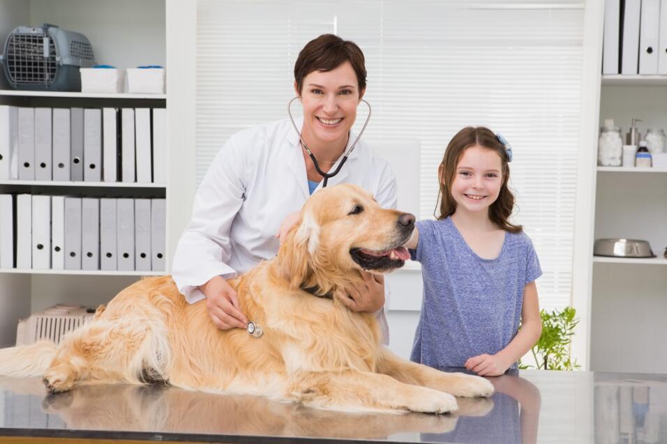 mantén limpio a tu perro