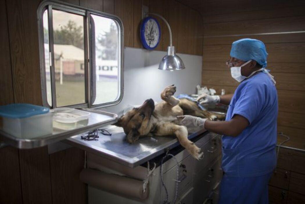 Y ante el anuncio de la liberación de los canes, por confirmarse que no...
