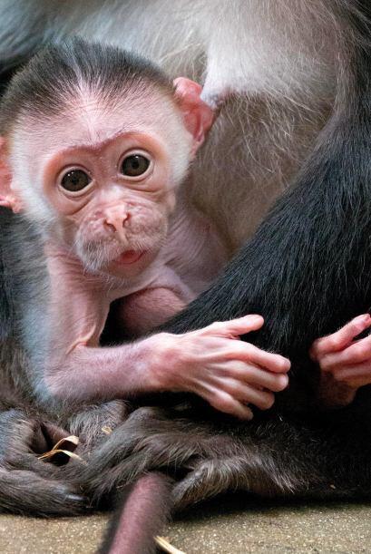 Es una maravilla su nacimiento debido a que su especie está amena...