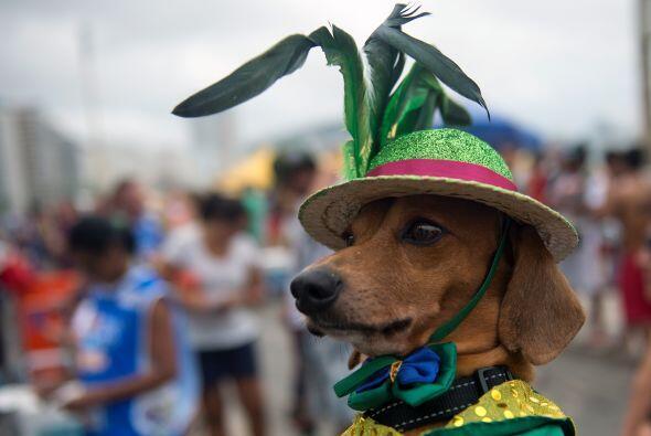 Por supuesto, las mascotas ponen muy en alto el nombre se su país con su...
