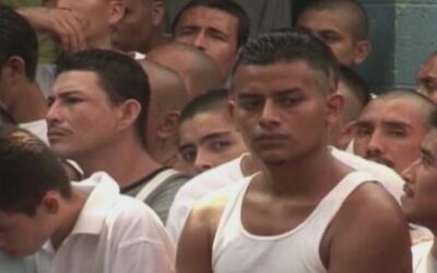 Cientos de arrestados en Houston y Corpus Christi en operativo antipandi...