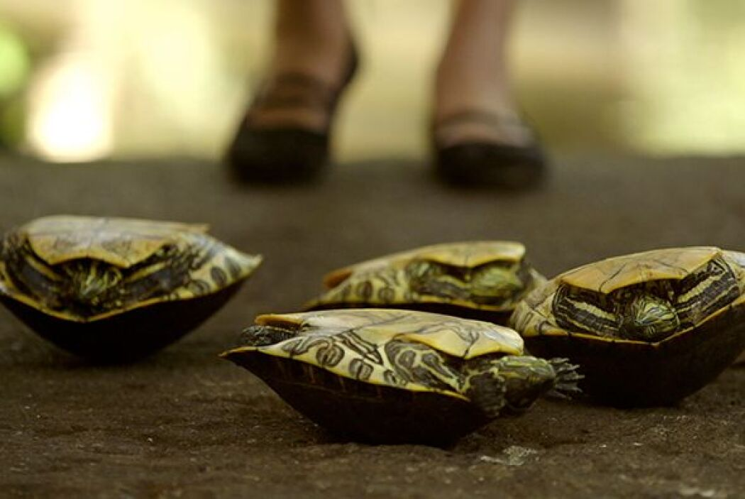 Las sanadoras maya-garífunas usan uno de los recursos naturales más abun...