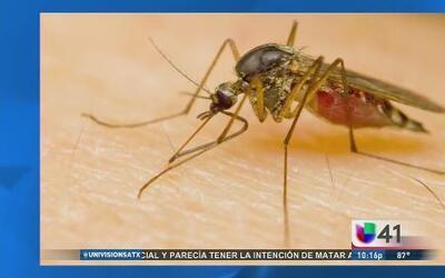 Mosquitos, una molestia voladora y portadora de enfermedades