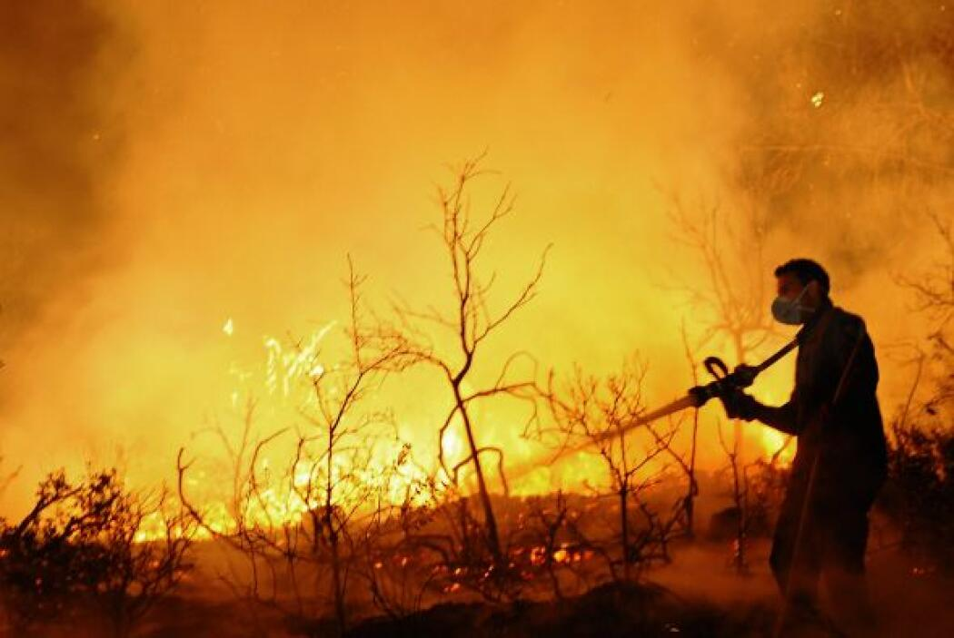 Hoy Israel registró un incendio forestal, en el Bosque de Carmel, cerca...