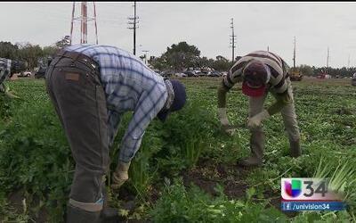 Parte 1: Explotación y robo de salarios a trabajadores del campo en CA