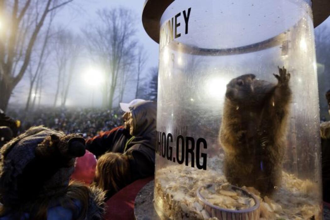 La marmota Phil salió de su guarida en el pequeño pueblo de Punxsutawney...