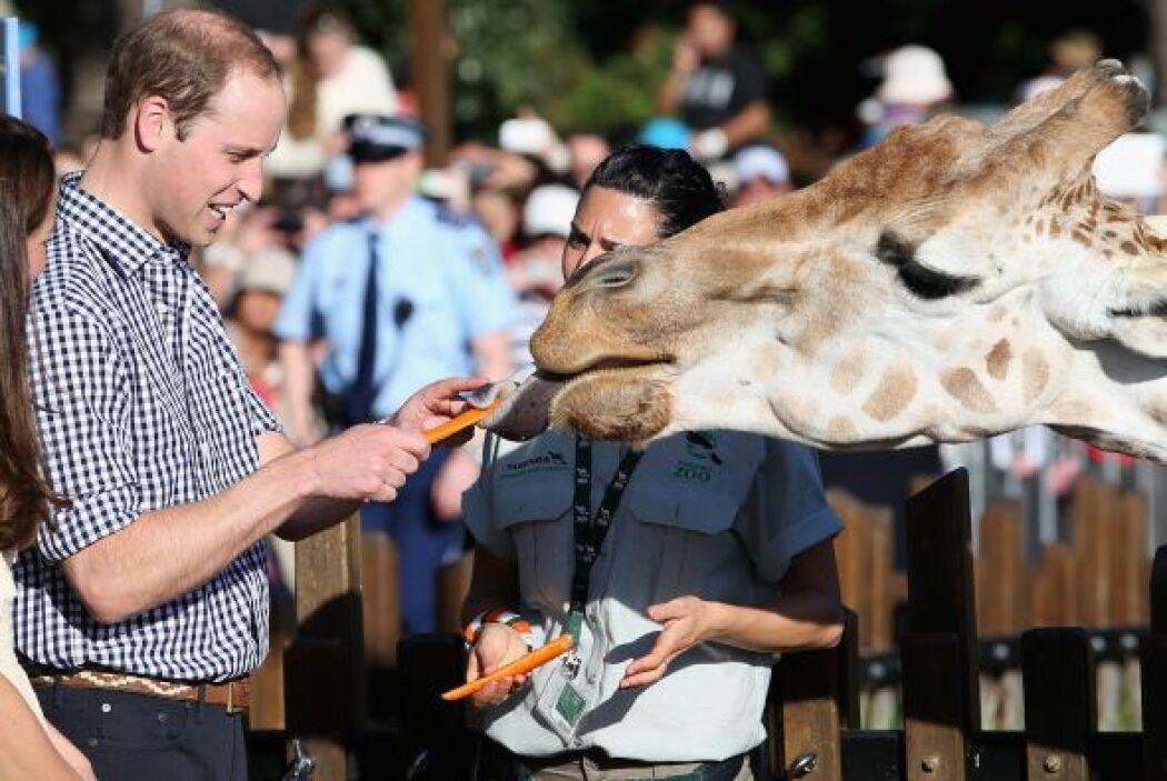 También el duque mostró empatía con los animales.