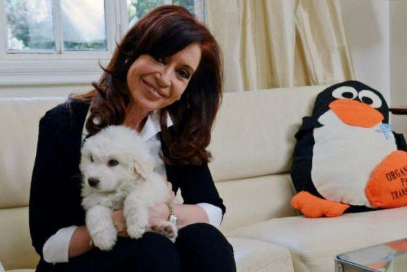 Simón, el perro que Adán Chávez, el hermano del fallecido presidente ven...