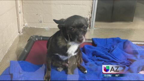 Una organización busca voluntarios para atender un refugio de animales