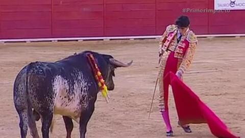 Familiares del torero que recibió cornada mortal planean demandar a los...