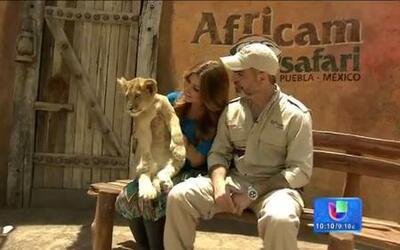 Un safari por el África en pleno México