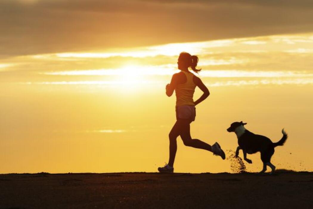 Recuerda correr lo necesario pues tu perro puede extralimitarse en cuant...