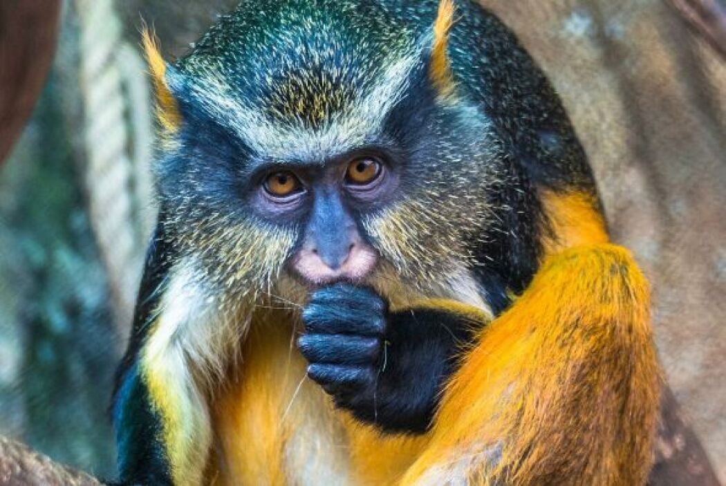 Lessy Sebastian retrató al extraño animal en el Secret Zoo de la ciudad...