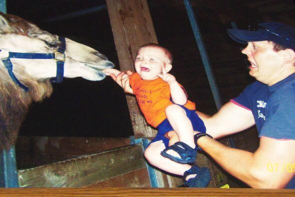 Un viaje al zoológico resultó en un momento de pánico para un padre y su...