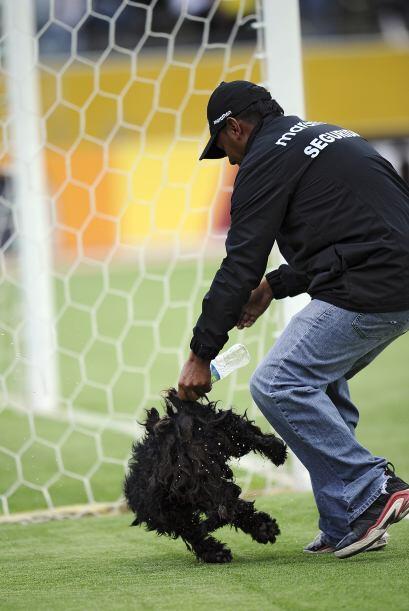 En el mismo partido un perro hincha fana de Venezuela se metió en...