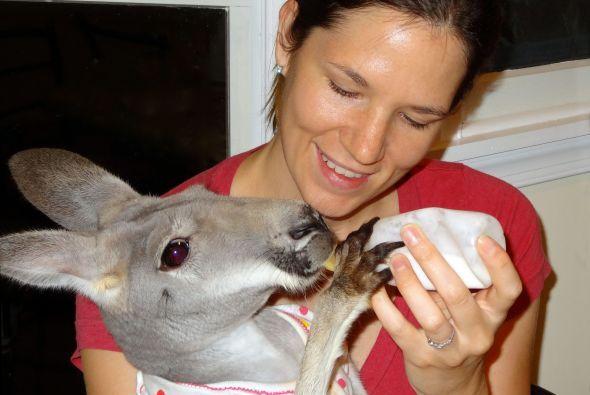 Tener  una mascota como Bomeroo sin duda es una gran responsabilidad que...