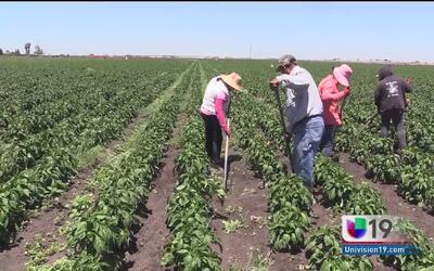 Agricultores preocupados por la candidatura de Donald Trump