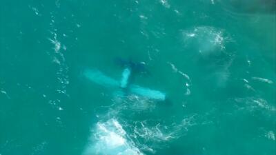 Avioneta cae al mar cerca de Haulover Beach