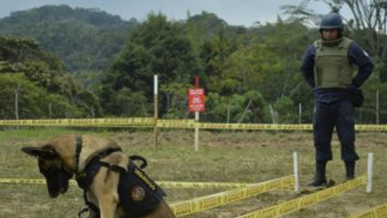 El plan del Gobierno y la guerrilla pretende erradicar los explosivos se...