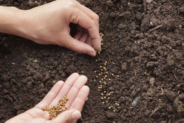 'Compost'. Es un hecho que las plantas que crecen en una tierra llena de...