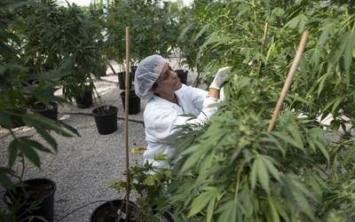 Latinoamérica Homepage marihuana.jpg