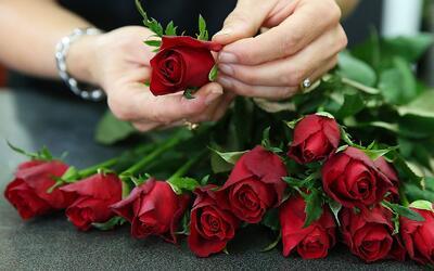 Por culpa de la tecnología, la venta de rosas en San Valentín ha quedado...