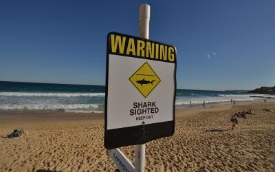 Autoridades en el sur de California investigan un ataque de tiburón en l...