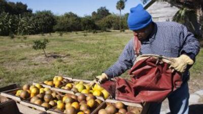 La agricultura es uno de los principales rubros del estado de Florida y...