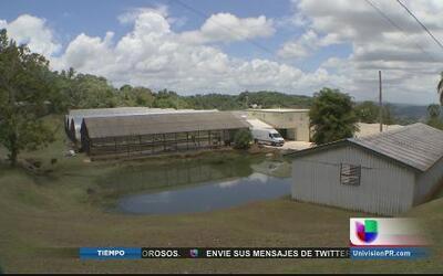 Epicentro agrícola del Caribe por un Puerto Rico Mejor