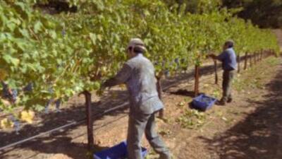 La mayoría de los inmigrantes trabajan en las áreas de agricultura.