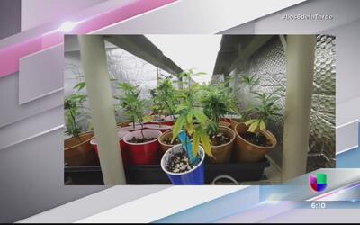 Con muchas lagunas el negocio de la marihuana medicinal