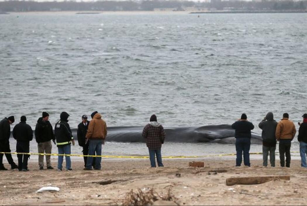 Personal policial y de los bomberos se han dirigido a la playa situada e...