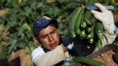 La Corte Suprema falló a favor de los jornaleros latinos, quienes podrán...