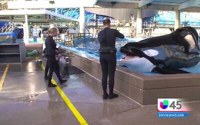 Sea World anunció fin de programa de cría de orcas