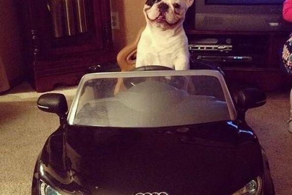 Si su dueño tiene un auto como estos, su mascota también debe tener uno...