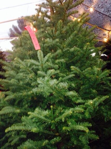Este fue el árbol que Tara Reid eligió para este año.