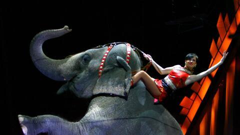 Estos fueron algunos de los mayores atractivos del circo que este sábado...
