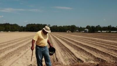 Los agricultores estadounidenses están alarmados por la escasez de traba...