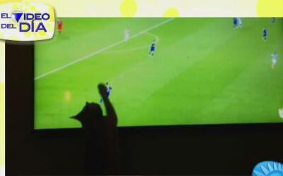 Video del día: El gato mundialista de Despierta América