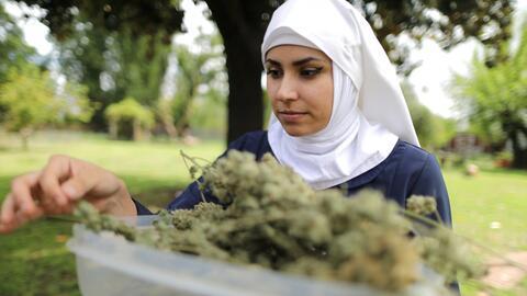 Las 'monjas de la marihuana' de California que cultivan y hacen producto...