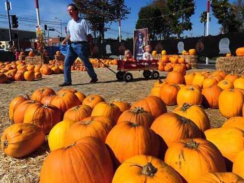 ¡Escoge tu calabaza para Halloween!