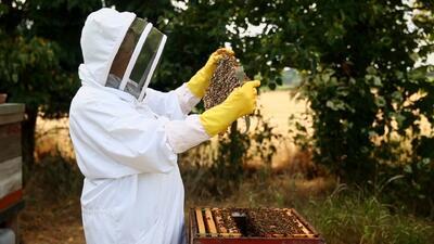 Adelanto: Las picaduras de abejas que sanan dolores