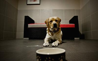 ¿Por qué es importante adoptar una mascota que venga de un refugio?