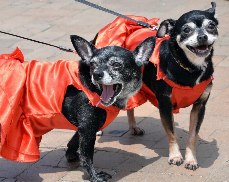 perros para personas low energy