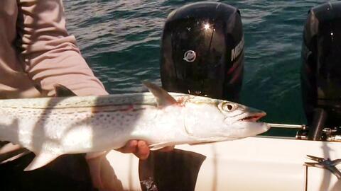 ¿Cómo pescar un pez macarela?