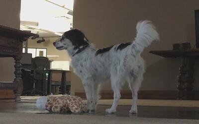 Evento en Phoenix para esterilizar mascotas a bajo costo