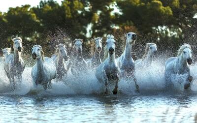 ¡A cabalgar sobre las refrescantes olas!
