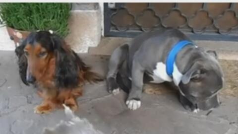 Hombre regañando a sus mascotas se volvió viral