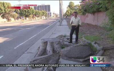 ¿Quién paga por las aceras dañadas en LA?