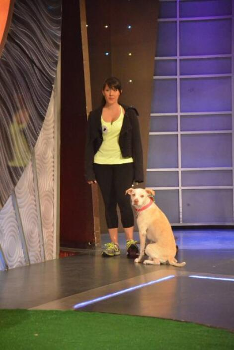 Llega a nuestra competencia 'Las gracias de las mascotas', Leia, una lab...